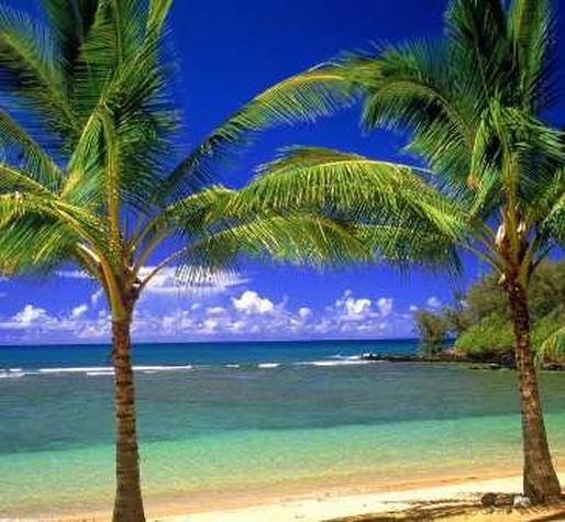 thème de soirée déguisée tropicale